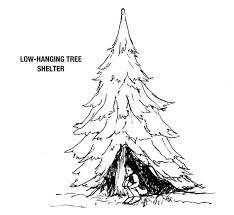 sprucetreeshelter